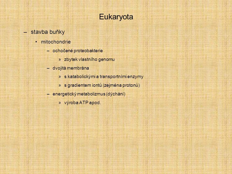 Eukaryota stavba buňky mitochondrie ochočené proteobakterie