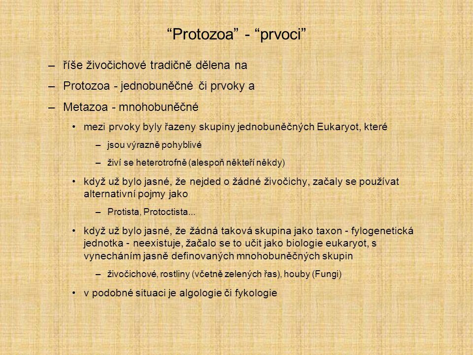 Protozoa - prvoci říše živočichové tradičně dělena na