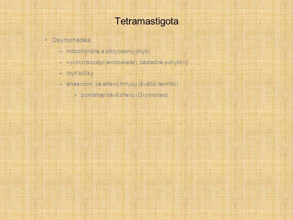 Tetramastigota Oxymonadea mitochondrie a diktyosomy chybí