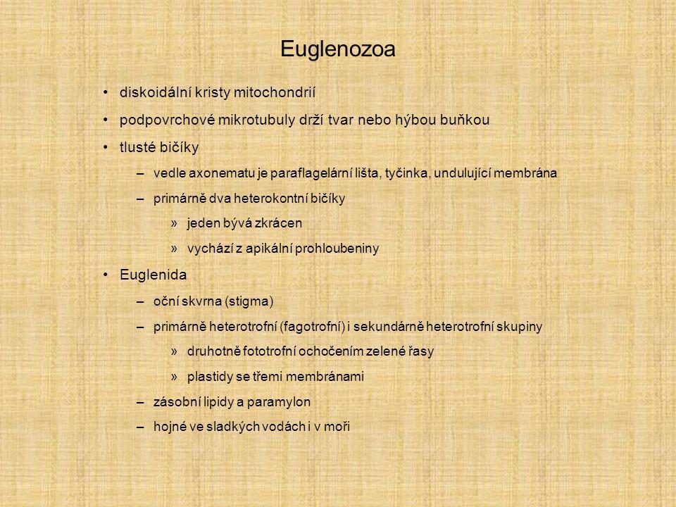 Euglenozoa diskoidální kristy mitochondrií