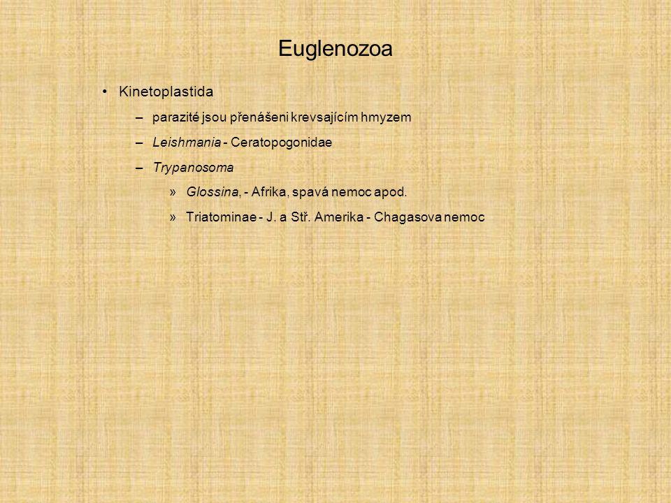 Euglenozoa Kinetoplastida parazité jsou přenášeni krevsajícím hmyzem
