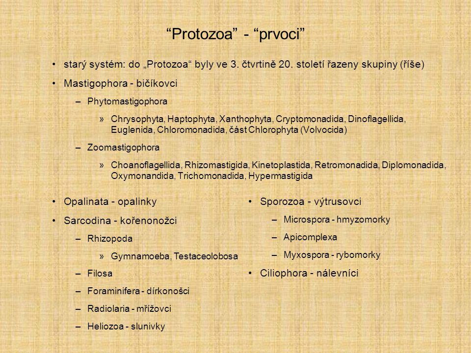 """Protozoa - prvoci starý systém: do """"Protozoa byly ve 3. čtvrtině 20. století řazeny skupiny (říše)"""