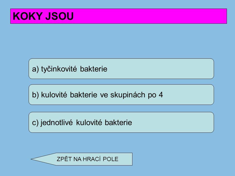 KOKY JSOU a) tyčinkovité bakterie