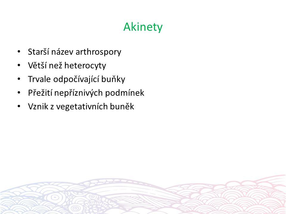 Akinety Starší název arthrospory Větší než heterocyty