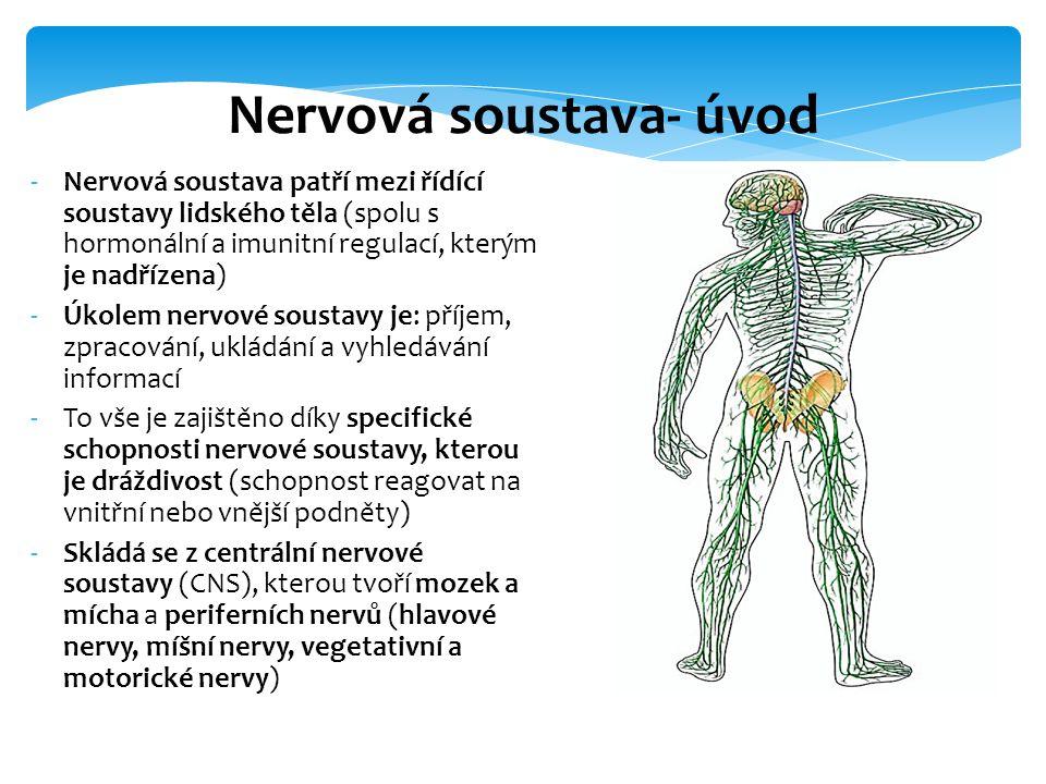 Nervová soustava- úvod