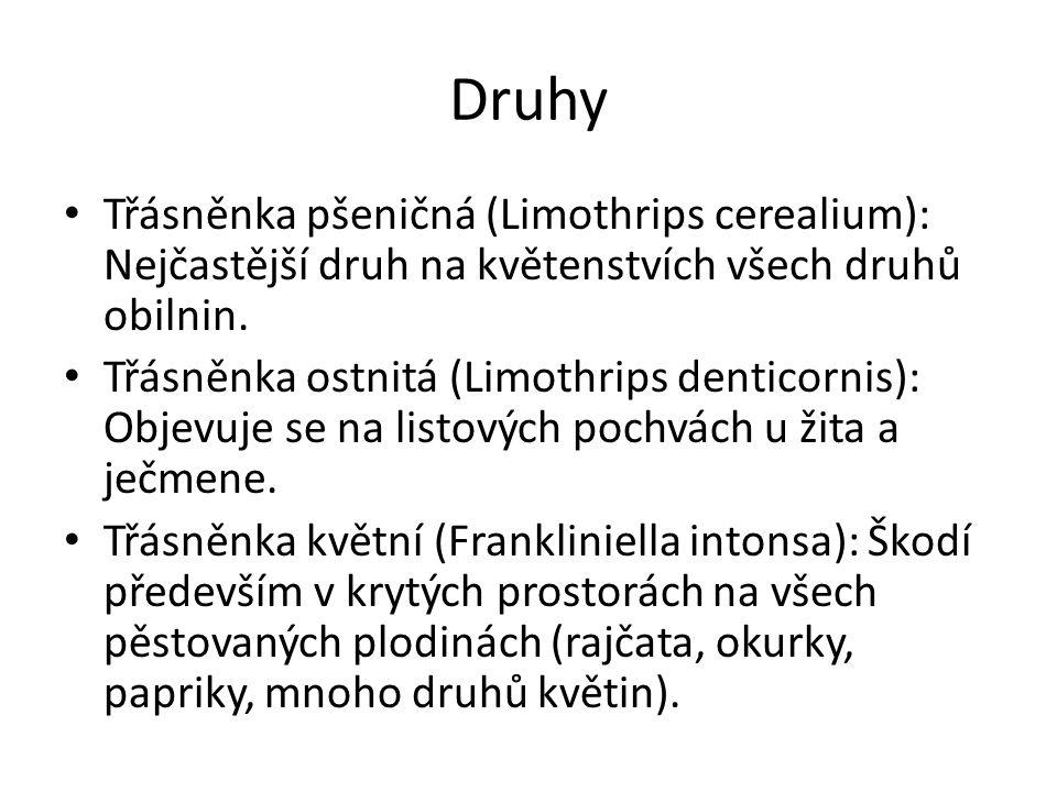 Druhy Třásněnka pšeničná (Limothrips cerealium): Nejčastější druh na květenstvích všech druhů obilnin.