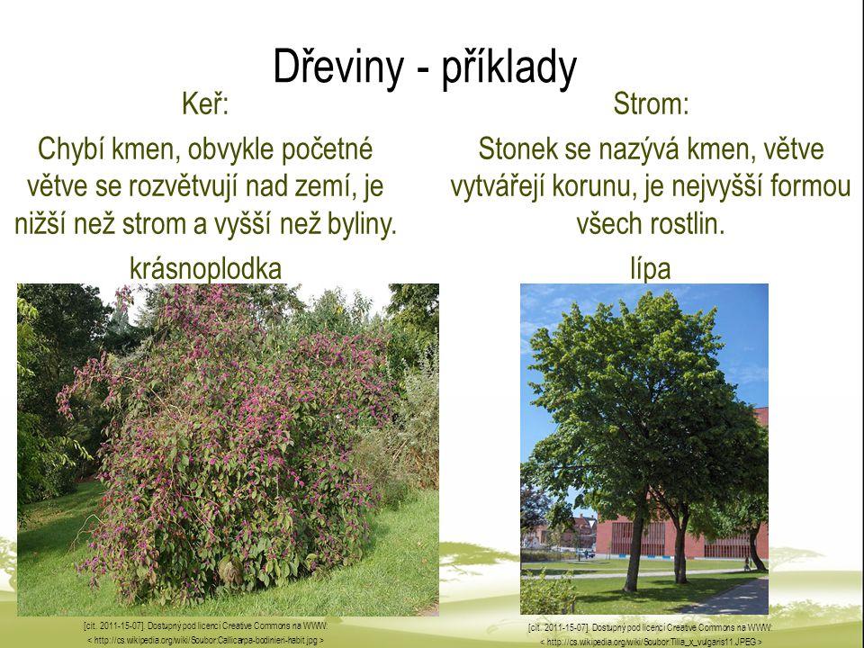 Dřeviny - příklady Keř: