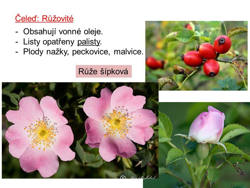 Čeleď: Růžovité Obsahují vonné oleje. Listy opatřeny palisty.