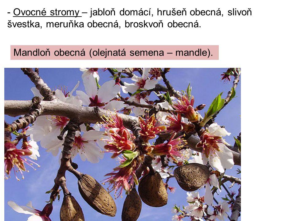 - Ovocné stromy – jabloň domácí, hrušeň obecná, slivoň švestka, meruňka obecná, broskvoň obecná.