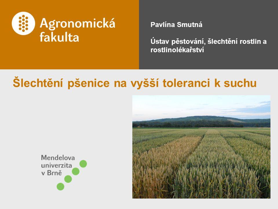 Šlechtění pšenice na vyšší toleranci k suchu