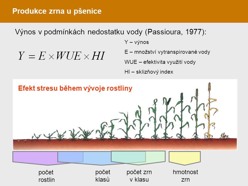 Produkce zrna u pšenice