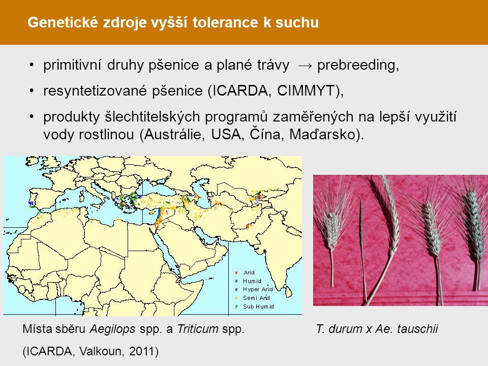 Genetické zdroje vyšší tolerance k suchu