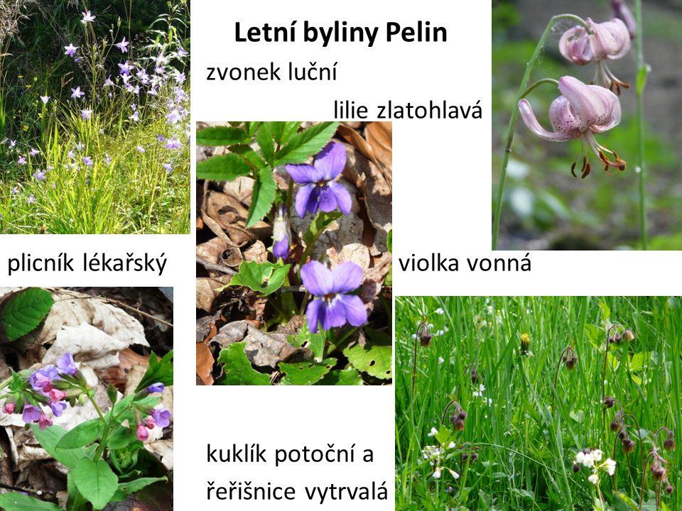 Letní byliny Pelin zvonek luční lilie zlatohlavá