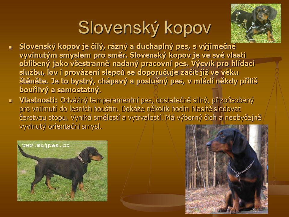 Slovenský kopov