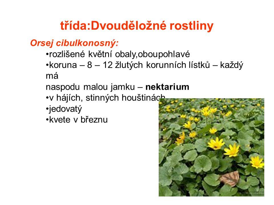 třída:Dvouděložné rostliny
