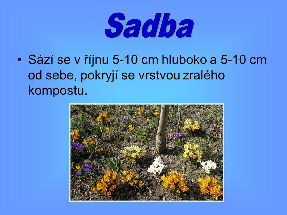 Sadba Sází se v říjnu 5-10 cm hluboko a 5-10 cm od sebe, pokryjí se vrstvou zralého kompostu.