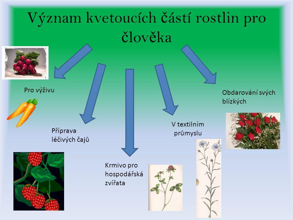 Význam kvetoucích částí rostlin pro člověka