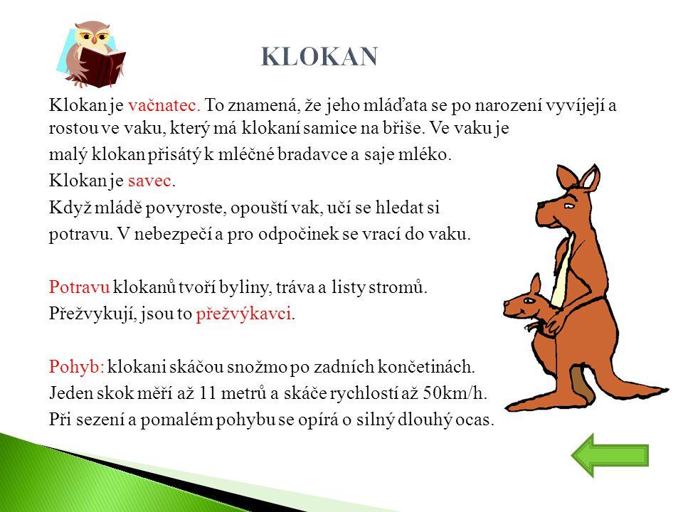 KLOKAN