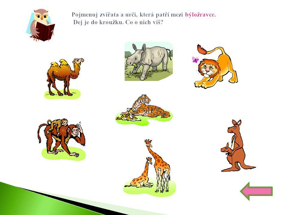 Pojmenuj zvířata a urči, která patří mezi býložravce. Dej je do kroužku. Co o nich víš