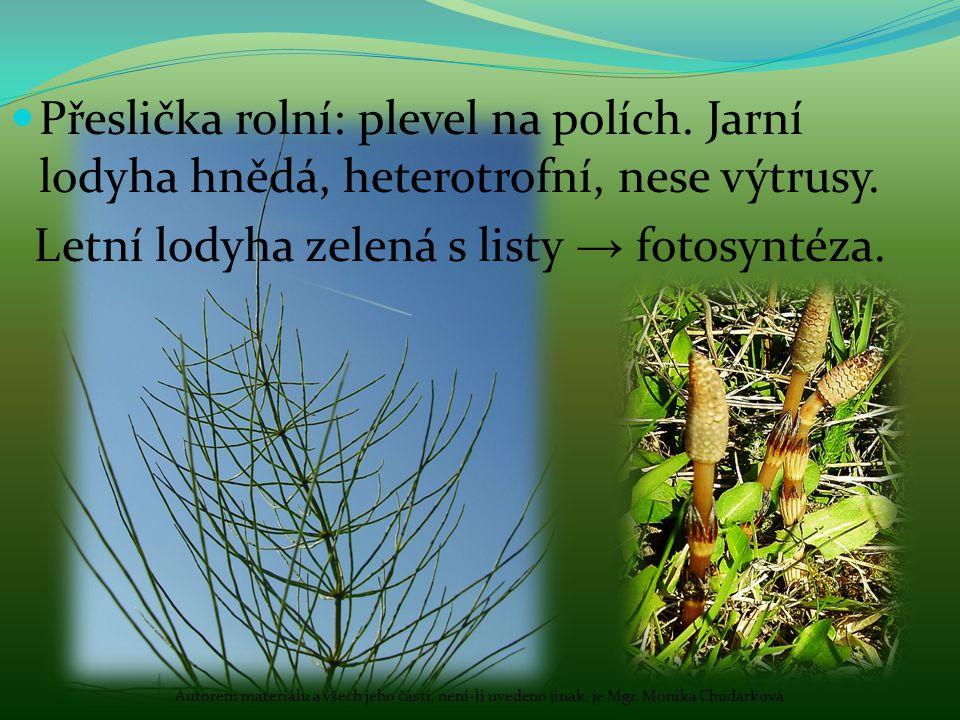Letní lodyha zelená s listy → fotosyntéza.