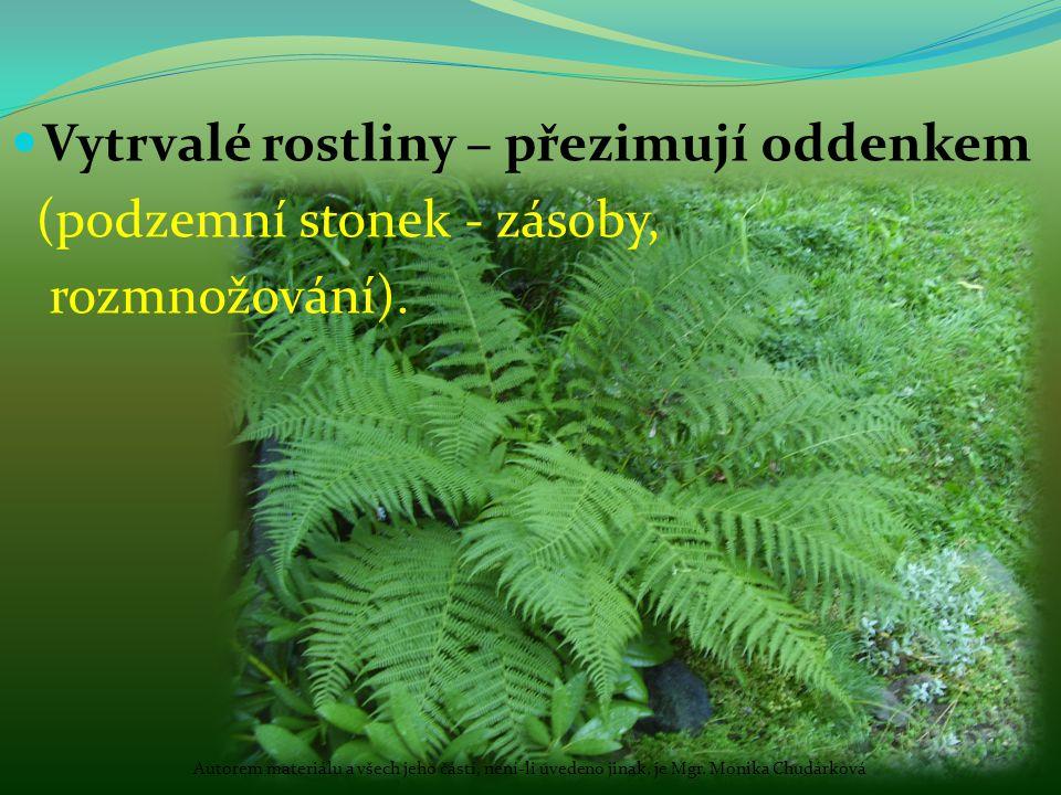 Vytrvalé rostliny – přezimují oddenkem (podzemní stonek - zásoby,