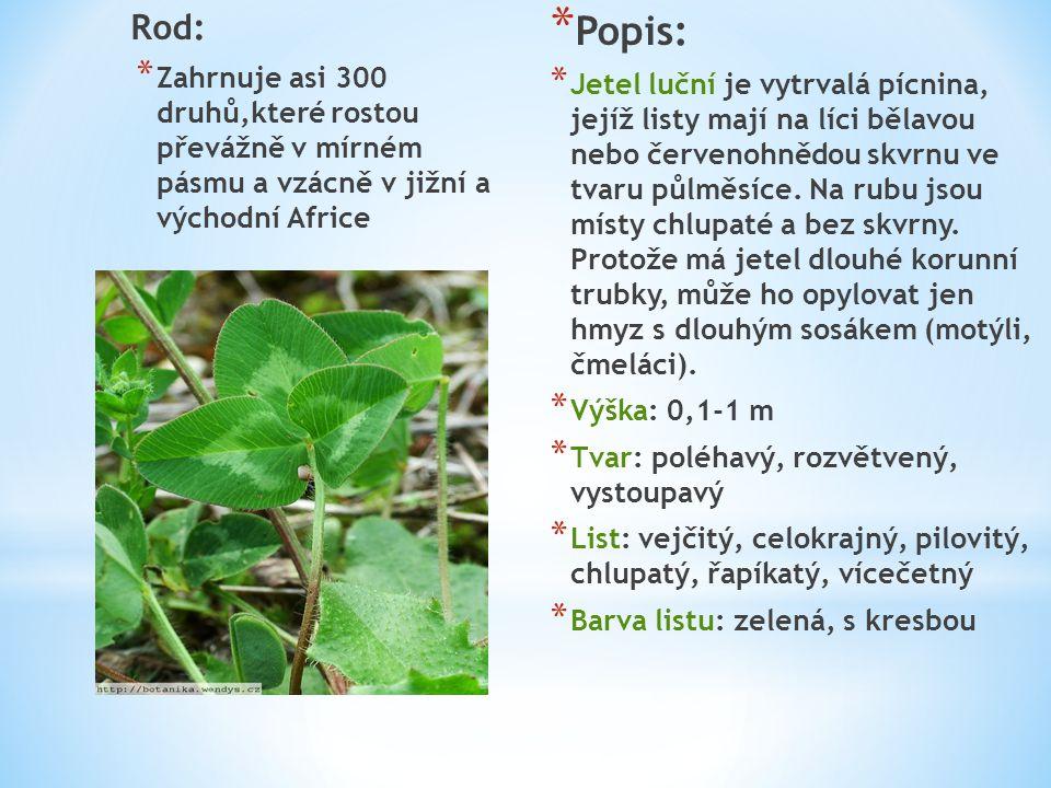 Rod: Zahrnuje asi 300 druhů,které rostou převážně v mírném pásmu a vzácně v jižní a východní Africe.