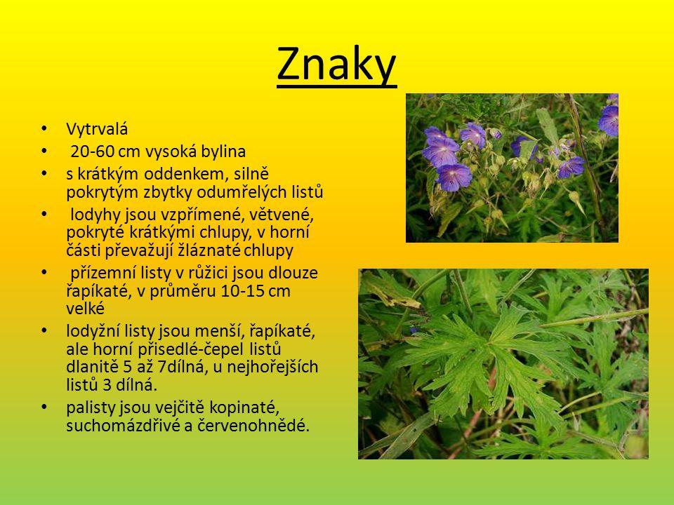 Znaky Vytrvalá 20-60 cm vysoká bylina
