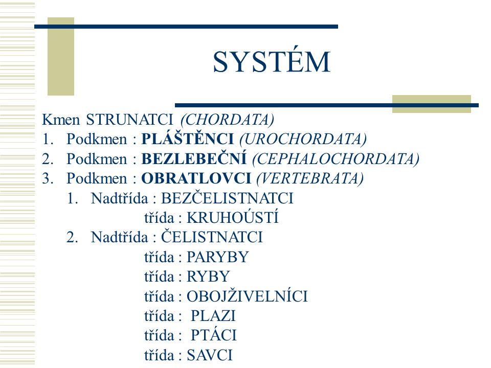 SYSTÉM Kmen STRUNATCI (CHORDATA) Podkmen : PLÁŠTĚNCI (UROCHORDATA)