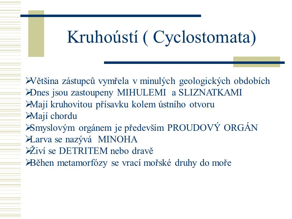 Kruhoústí ( Cyclostomata)