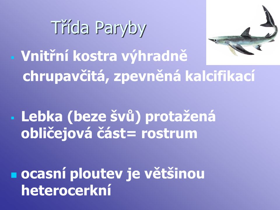 Třída Paryby Vnitřní kostra výhradně chrupavčitá, zpevněná kalcifikací