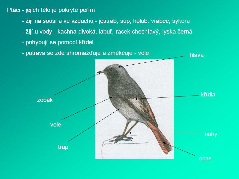 Ptáci - jejich tělo je pokryté peřím