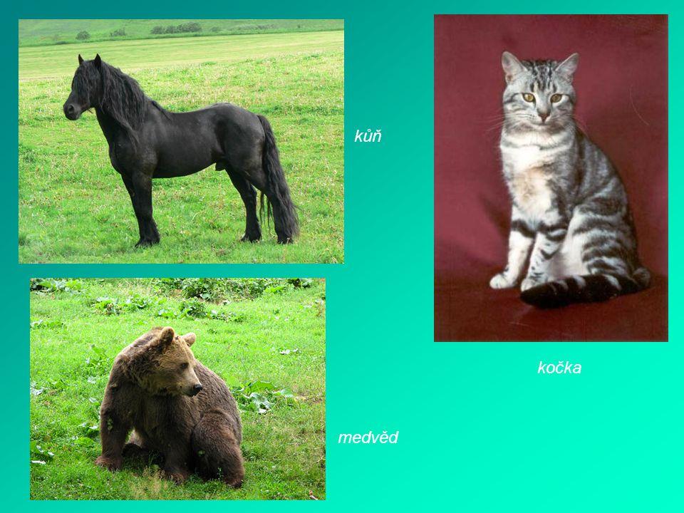 kůň kočka medvěd