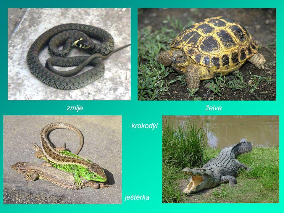 zmije želva krokodýl ještěrka