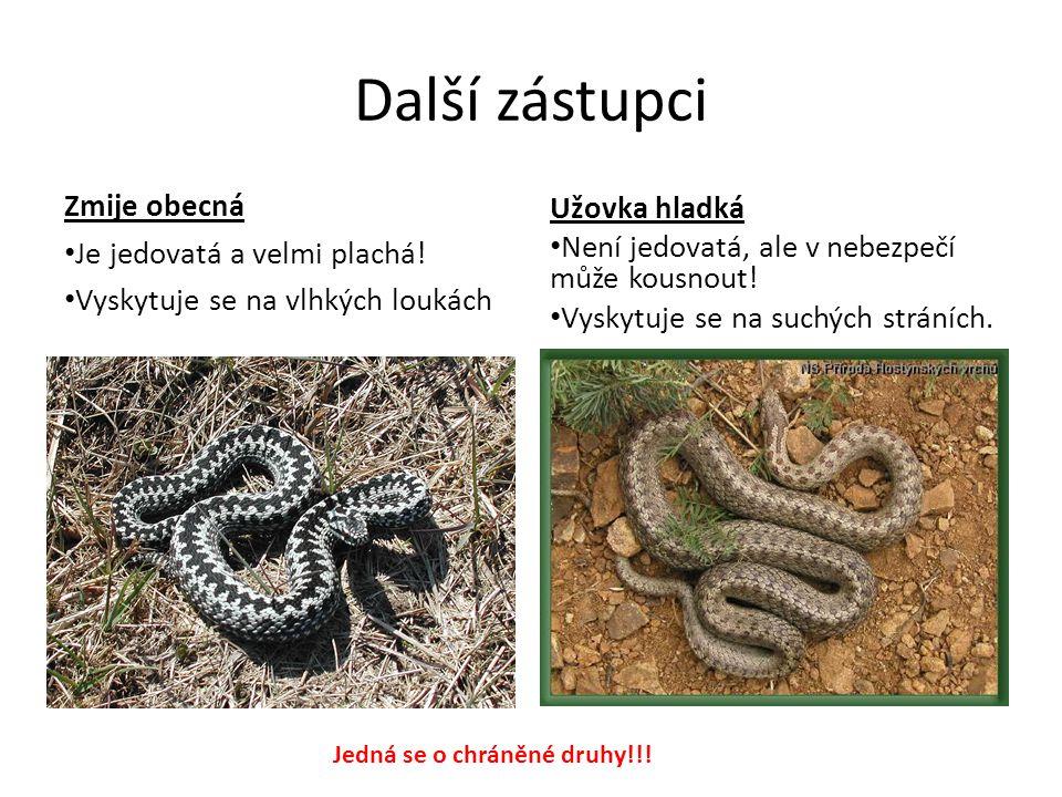 Další zástupci Zmije obecná Užovka hladká Je jedovatá a velmi plachá!