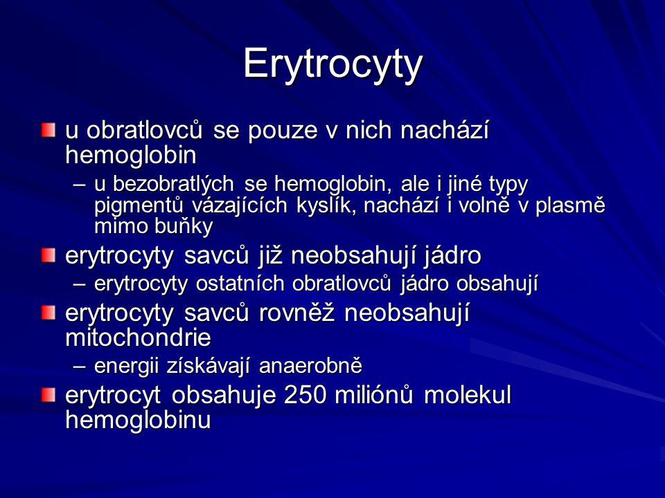 Erytrocyty u obratlovců se pouze v nich nachází hemoglobin