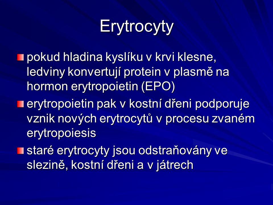 Erytrocyty pokud hladina kyslíku v krvi klesne, ledviny konvertují protein v plasmě na hormon erytropoietin (EPO)