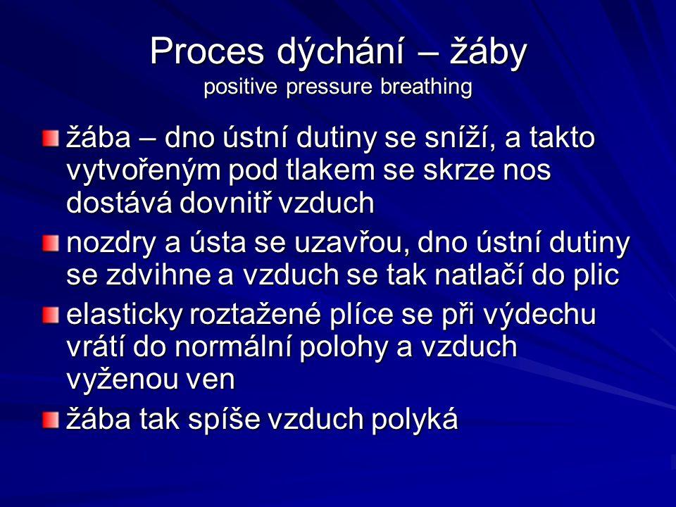 Proces dýchání – žáby positive pressure breathing