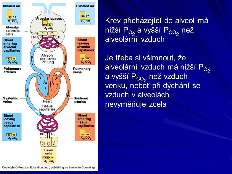 Krev přicházející do alveol má nižší PO2 a vyšší PCO2 než alveolární vzduch
