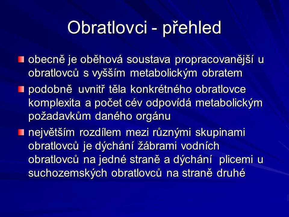 Obratlovci - přehled obecně je oběhová soustava propracovanější u obratlovců s vyšším metabolickým obratem.