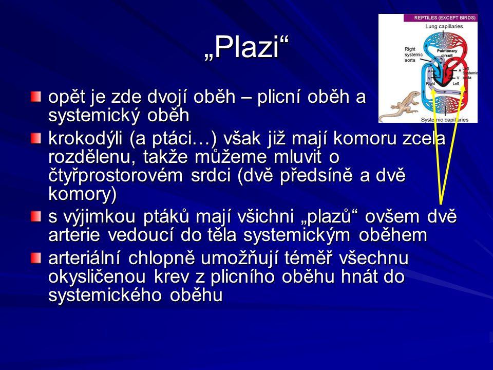 """""""Plazi opět je zde dvojí oběh – plicní oběh a systemický oběh"""