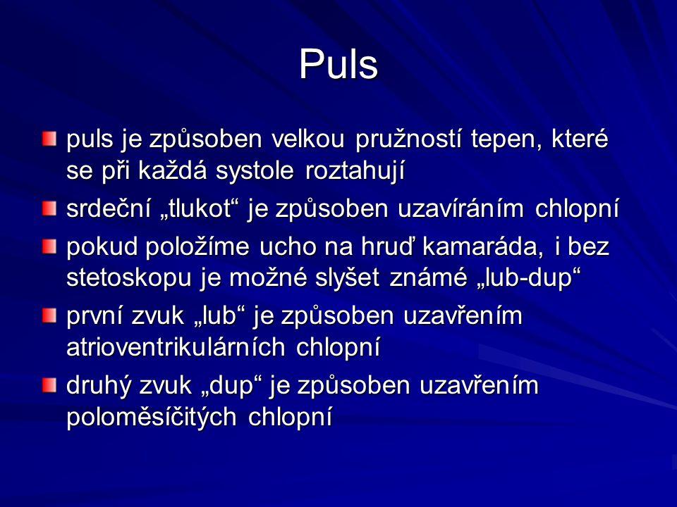 """Puls puls je způsoben velkou pružností tepen, které se při každá systole roztahují. srdeční """"tlukot je způsoben uzavíráním chlopní."""