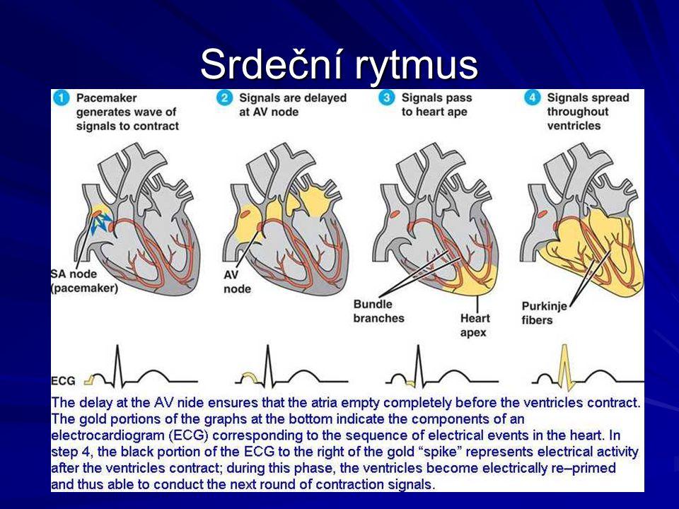 Srdeční rytmus