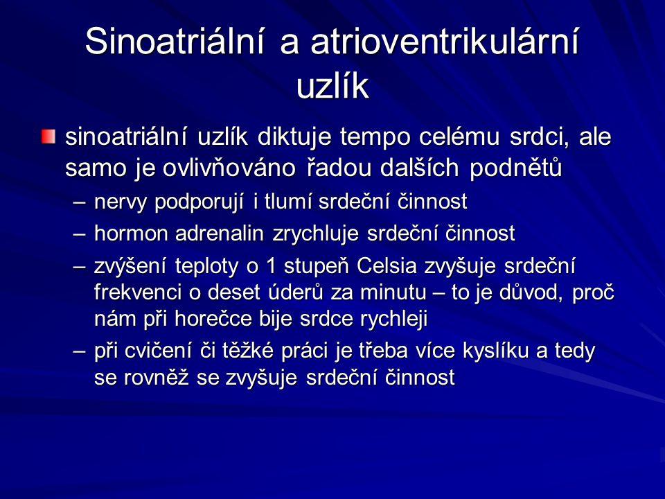 Sinoatriální a atrioventrikulární uzlík