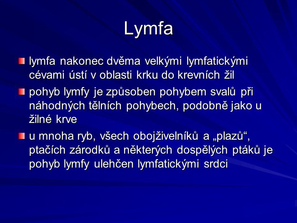 Lymfa lymfa nakonec dvěma velkými lymfatickými cévami ústí v oblasti krku do krevních žil.