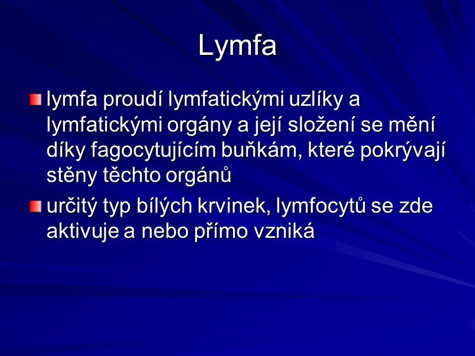 Lymfa lymfa proudí lymfatickými uzlíky a lymfatickými orgány a její složení se mění díky fagocytujícím buňkám, které pokrývají stěny těchto orgánů.
