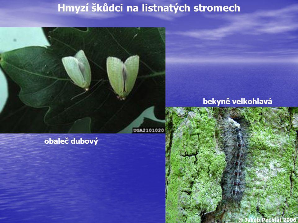 Hmyzí škůdci na listnatých stromech