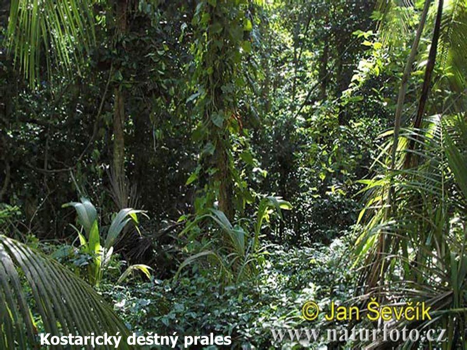 Kostarický deštný prales