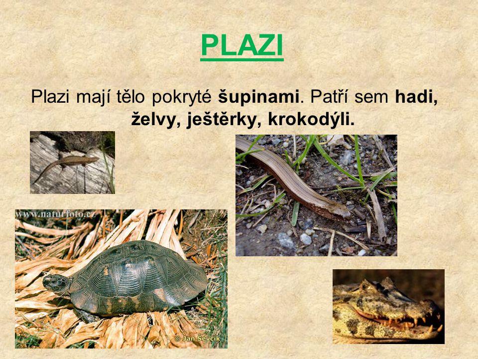 PLAZI Plazi mají tělo pokryté šupinami. Patří sem hadi, želvy, ještěrky, krokodýli.