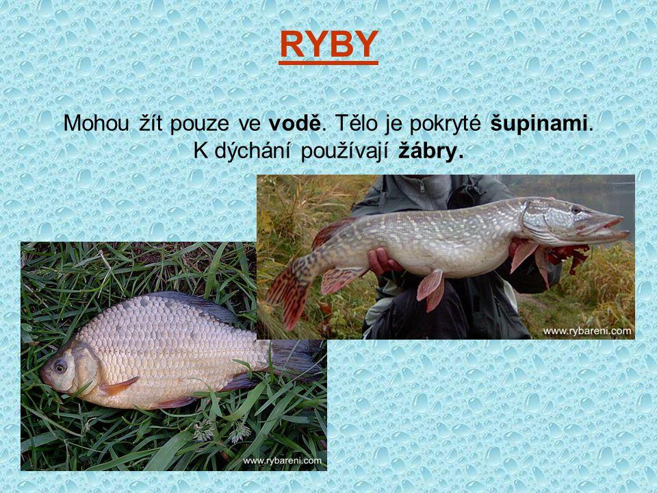 RYBY Mohou žít pouze ve vodě. Tělo je pokryté šupinami
