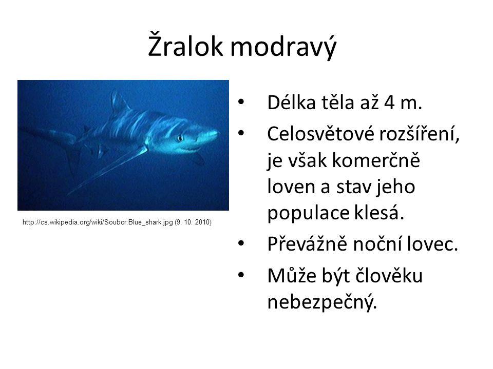Žralok modravý Délka těla až 4 m.